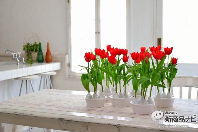 winter tulip_07