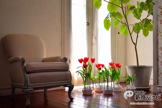 winter tulip_10