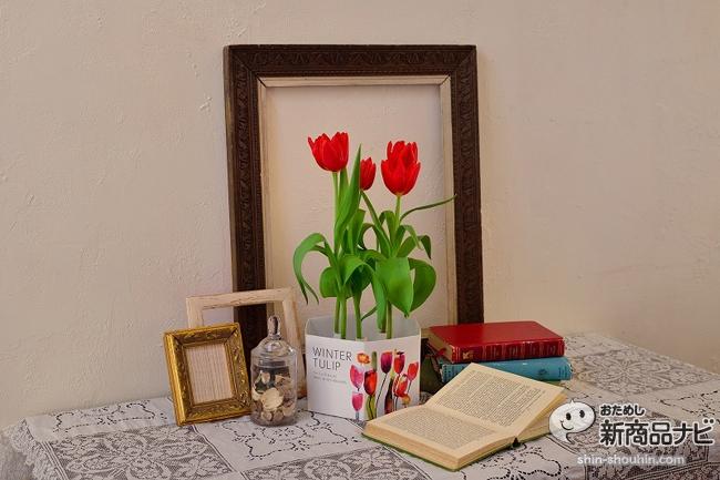 winter tulip_11