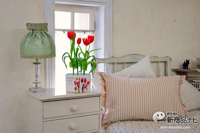 winter tulip_12